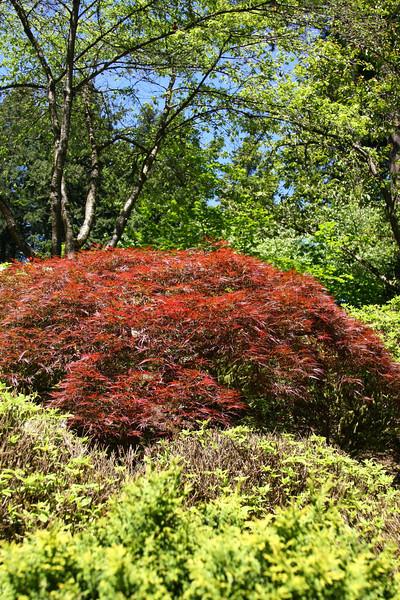 Portland Japanese Garden 6-3-11  1750.jpg