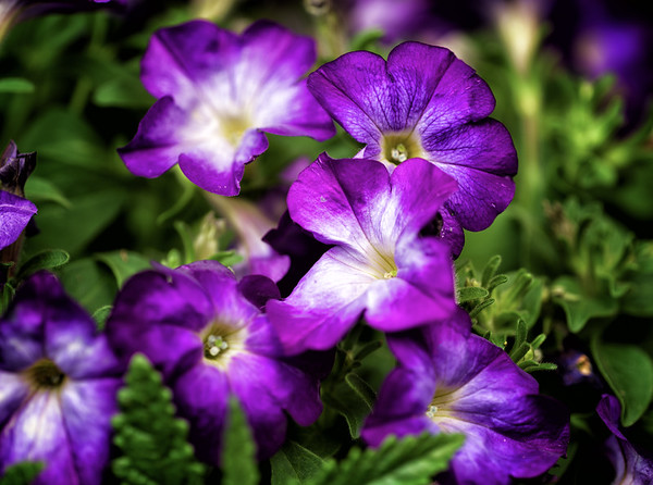 2016-05-09 Flowers