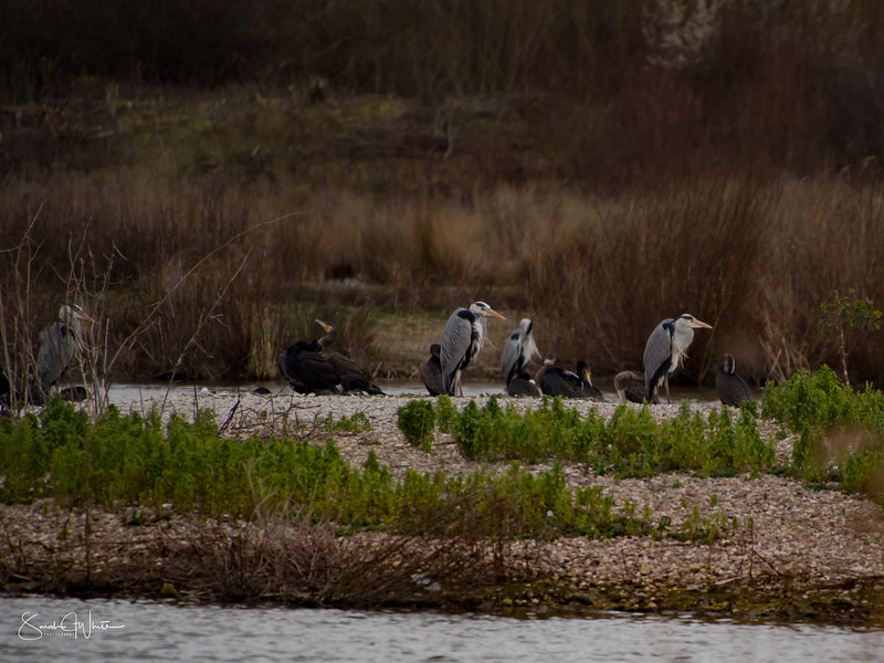 190316_London Wetlands_053.jpg