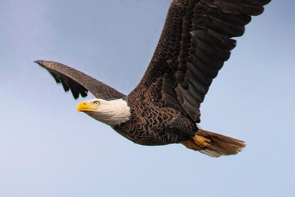 Baytown Eagles in Flight 2010