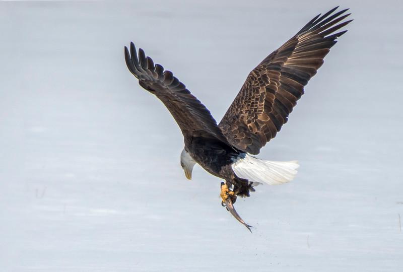 smug eagle 4.jpg
