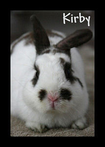 Kirby Bunny