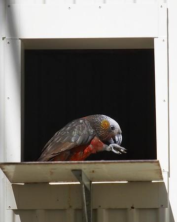 Dunedin Aviary