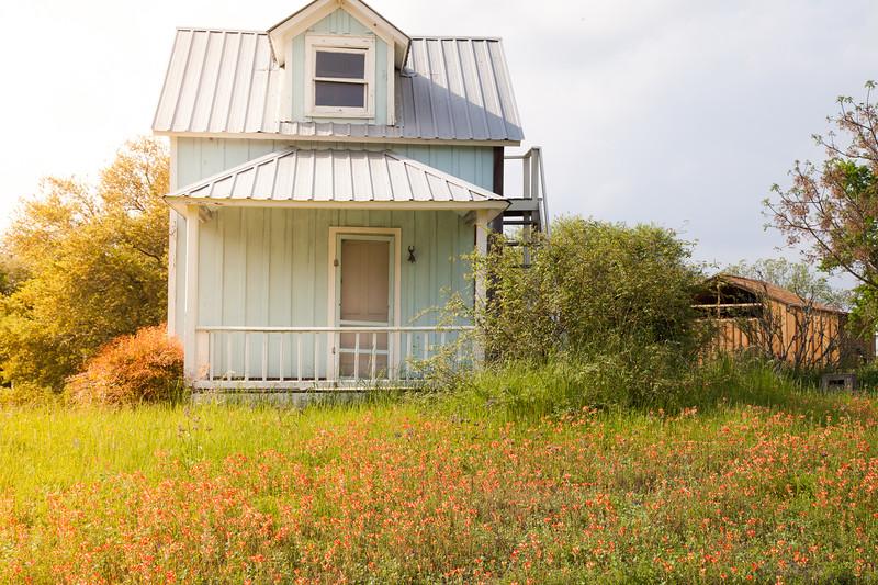 2015_4_3 Texas Wildflowers-7997.jpg