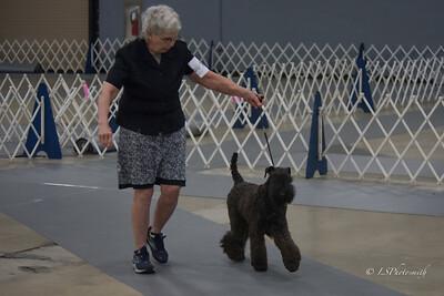 Everdlades Terrier Show 2021 Sunday