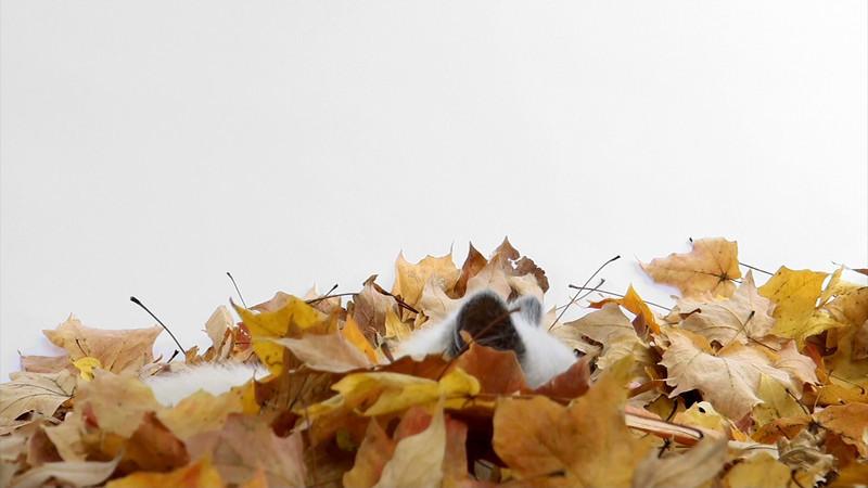 kitten_leaves_5_hiding.mov