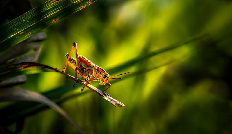 Grasshoppers 90.jpg