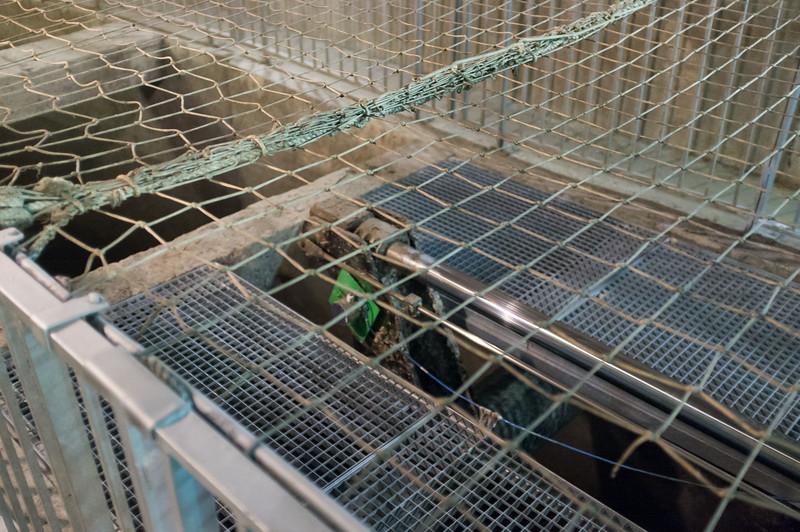 sewer_DSCF1561.jpg