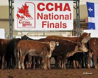 CANADIAN FINALS 2013 $35000 NP (2 GO)