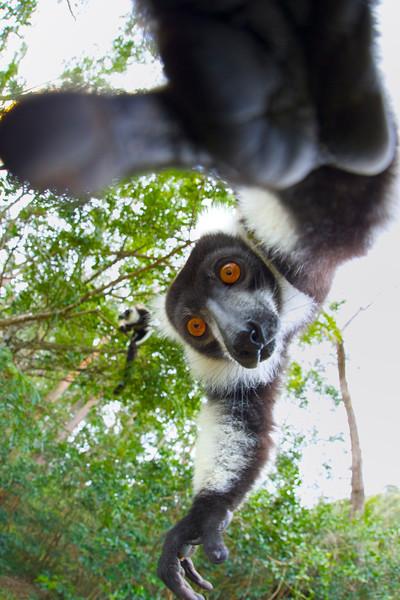 Madagascar_2013_FH0T8956.tiff.jpg
