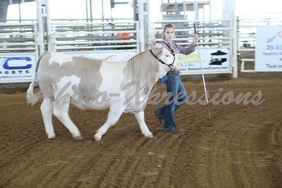 Steer Show Tuesday Sept 25
