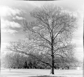 A nice big tree