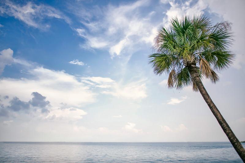 St Petersburg Palm Tree