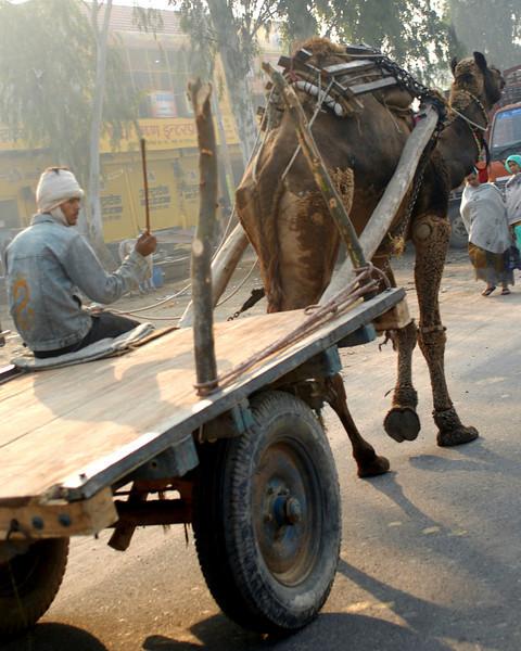 camel cart.jpg