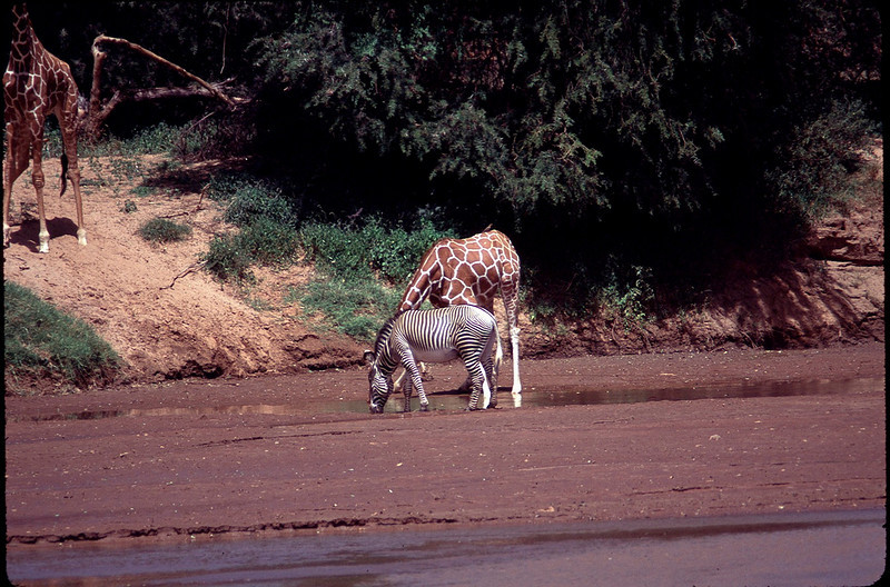Kenya1_062.jpg