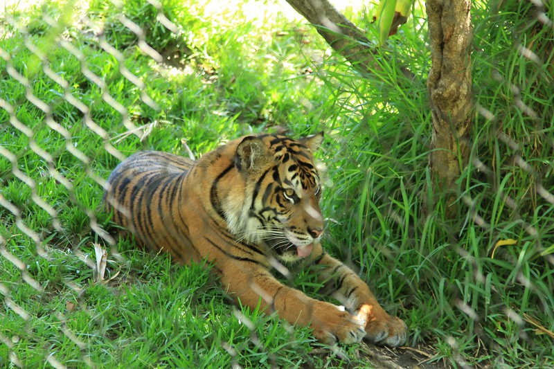 San Diego wild animal pakr 201700006.jpg