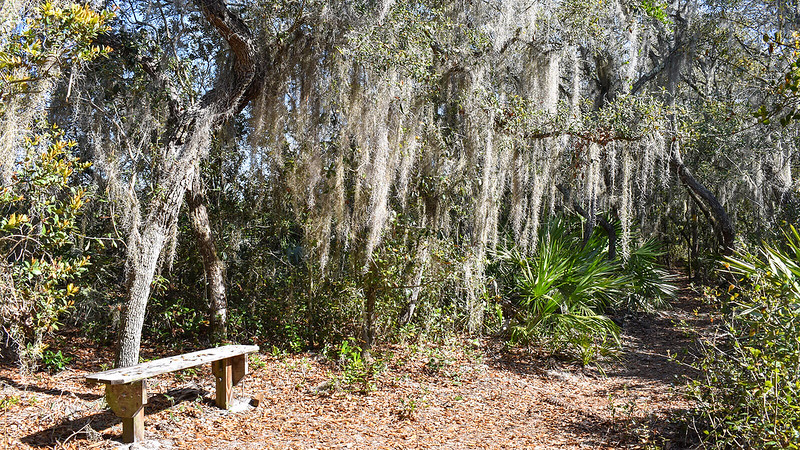 Bench under oaks
