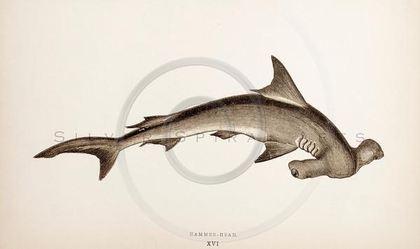Vintage Shark Images