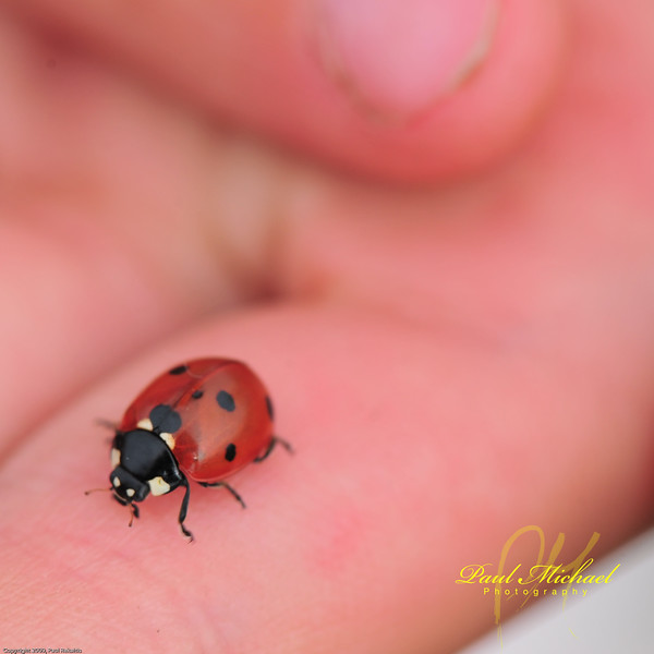 Lady bugs are cool.