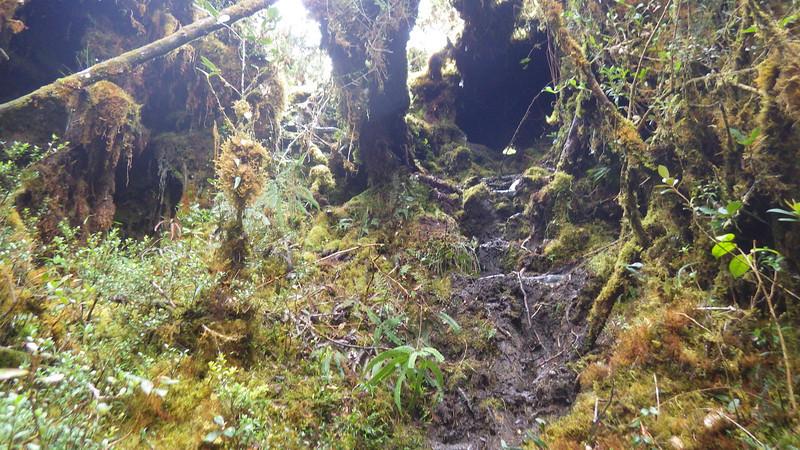 Papua jungle 4