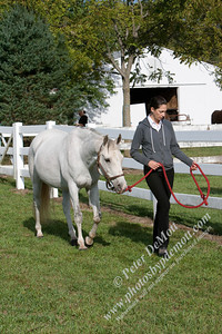 Royal K Horse Show 2012