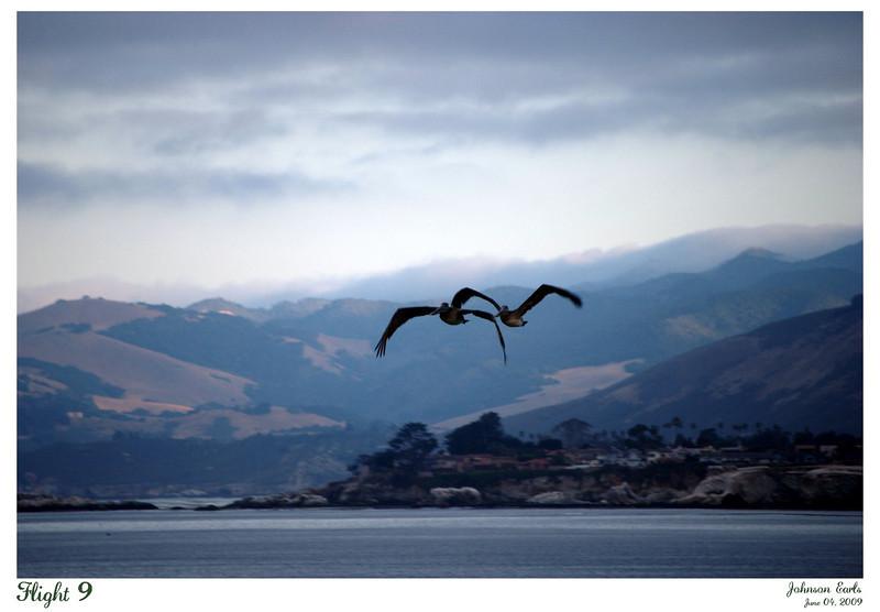 Flight 9  Pelicans.  Pismo Beach, California, 04 June 2009.