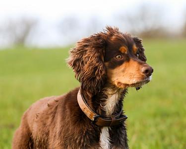 Dog Portrait Shoot - Jenny Hewitson