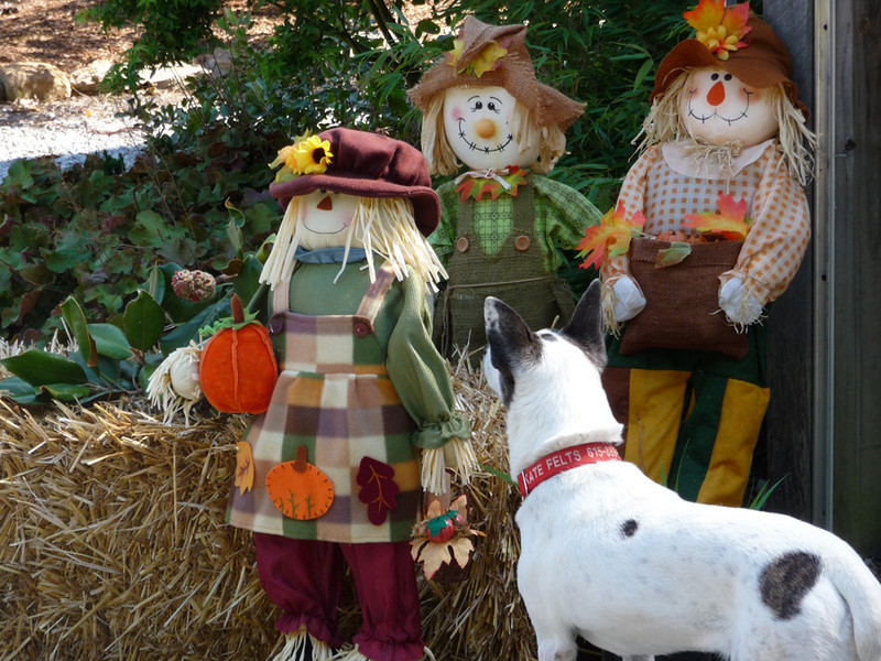 This one always has made me smile, as I came upon her staring intently at the scarecrow family display.  I know she thought they were real.