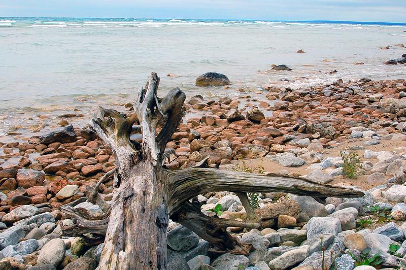 Mackinack tree.jpg