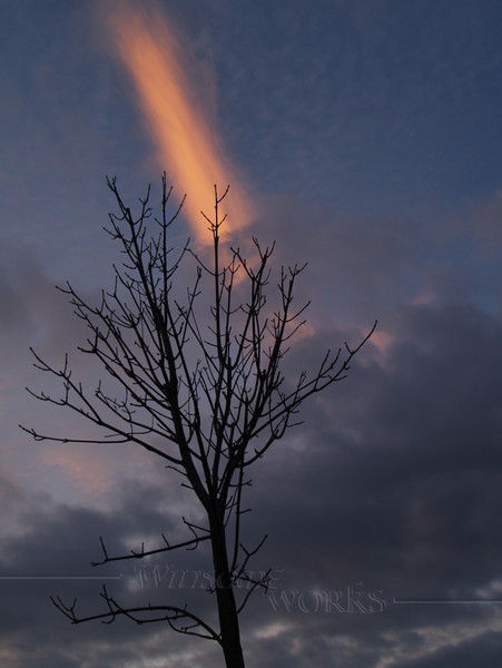Bare tree with winter sunset streak - Quakertown, PA   [Cropped]