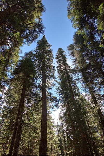 Sequoia-4-1.jpg
