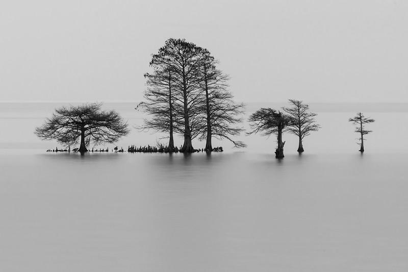 Lake Mattamuskeet Cypress Trees Monochrome.jpg