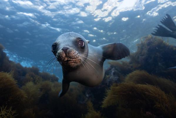 Coronado Islands Nov 2018 - Sea Lions