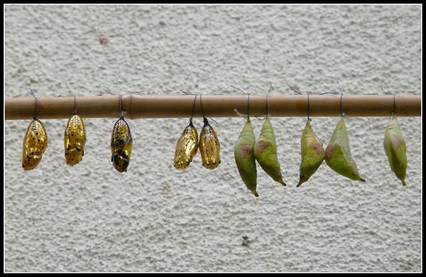 Butterfly Garden - Mainau (Germany)
