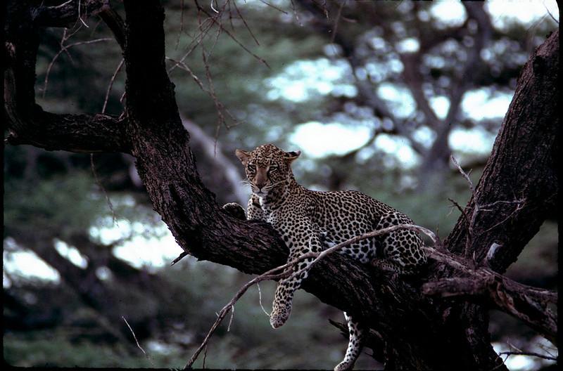 Kenya1_089.jpg