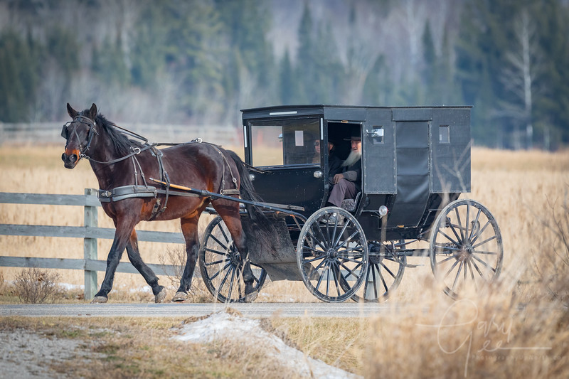 Amish Gentlemen in Buggy