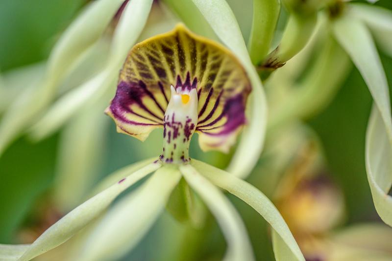 orchidroom-5.jpg