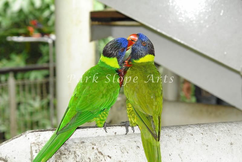 Birds-00136.jpg