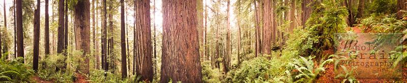 20141015_RedwoodsiPhone_0014.jpg