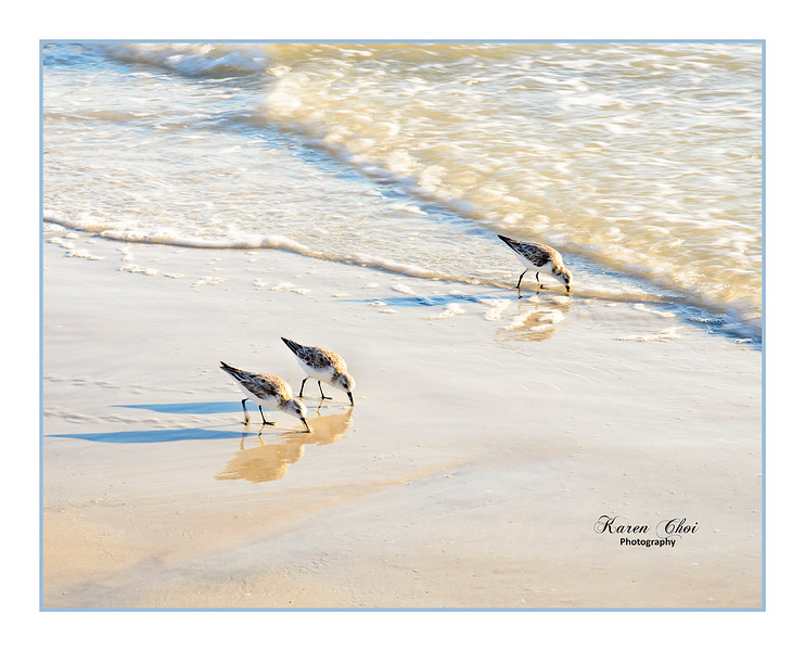 Plovers on the beach sm.jpg