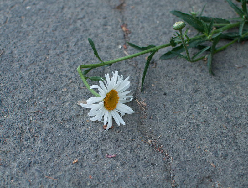flower_274.jpg