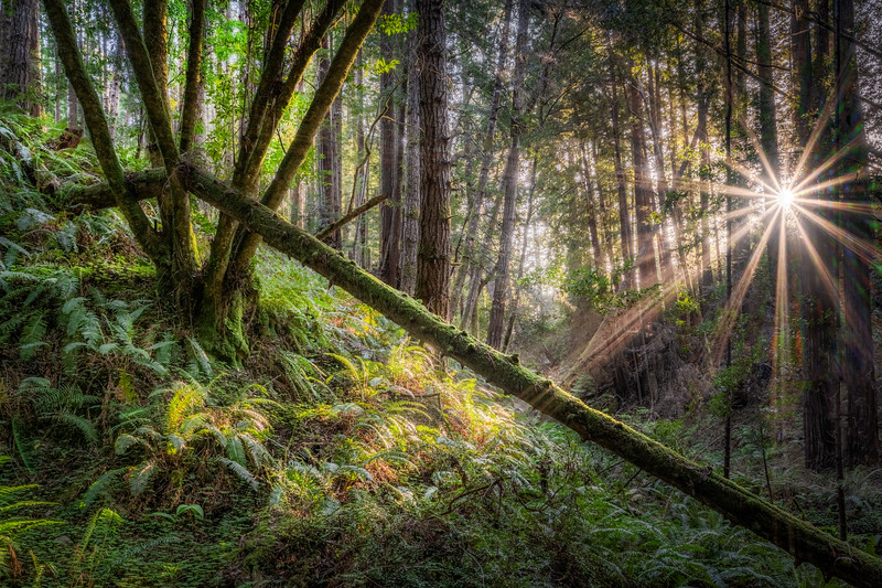Hugal Canyon Light Rays, Study 2, Sea Ranch, California