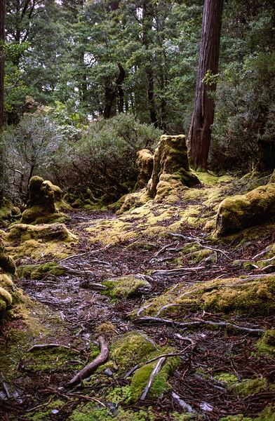 wiendorfers_forest.jpg