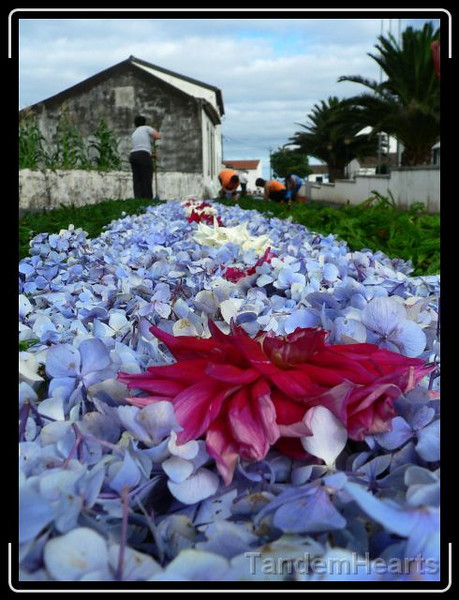 The most eye-catching aspect of this event is the carpet of flowers that is laid down the village streets for the parade. We had dinner reservations, so we could not stay for the whole thing, but it was fascinating to glimpse what we could.