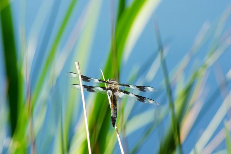 Dragon Fly ref: f46ef997-f4fa-4bc8-93fe-ae745e5fdd09