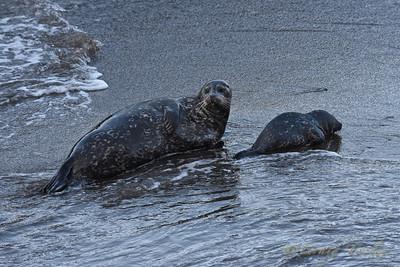 Seals 2015