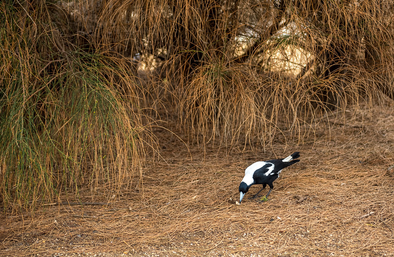 Australia-97.jpg