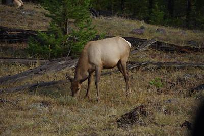 Yellowstone Day 1, Really.  Oct 1 2017