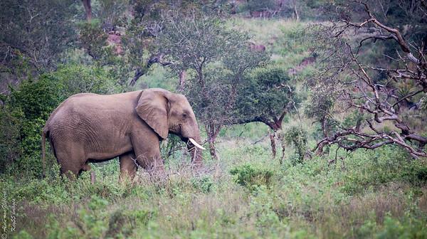 iMfolozi Game Reserve, KwaZulu-Natal, South Africa