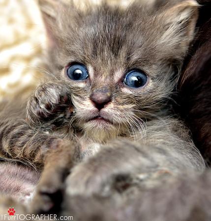 Toni's Kitty Rescue 2013